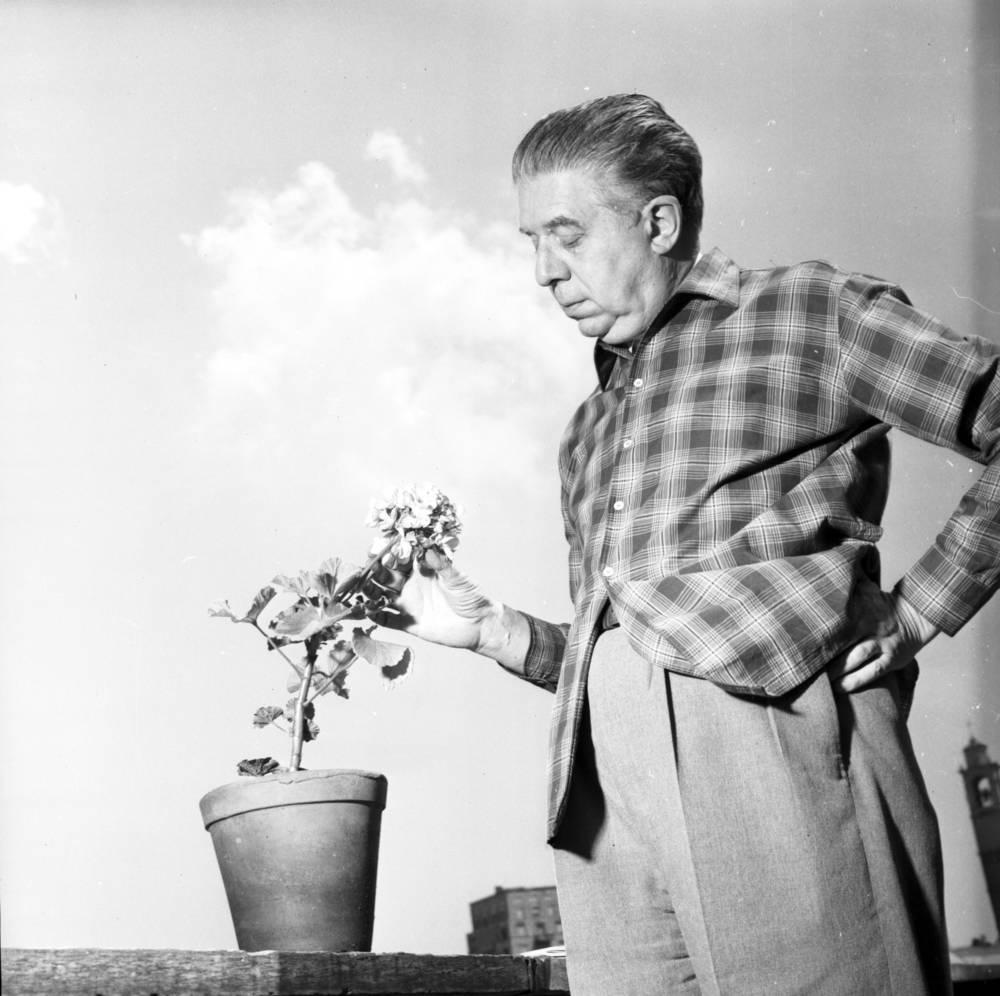 eugenio montale 1956 - Poesia Online